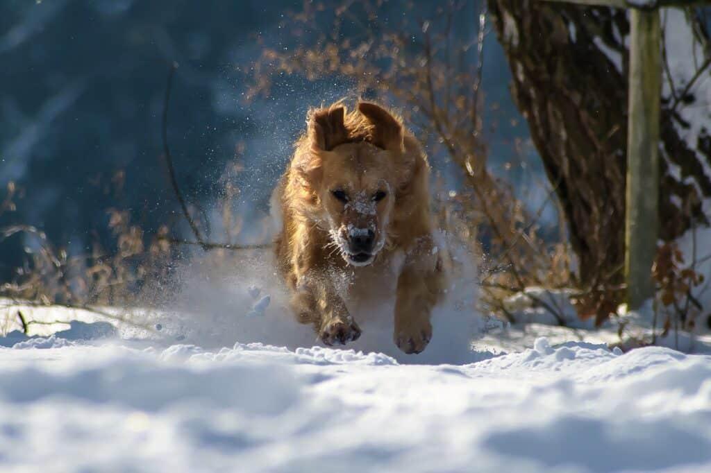 Met de hond naar Oostenrijk wintersport